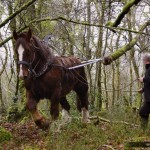2e journée de débardage à cheval au Bois du Nevet