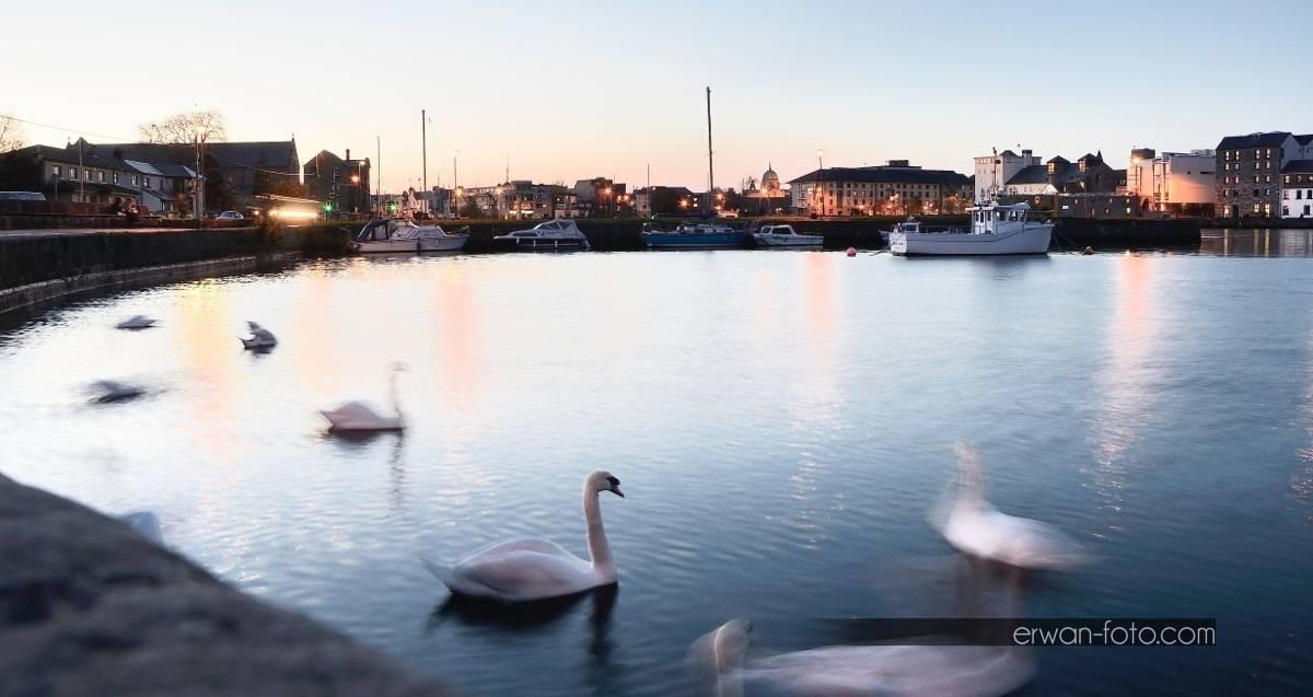 _DSC2707-swans