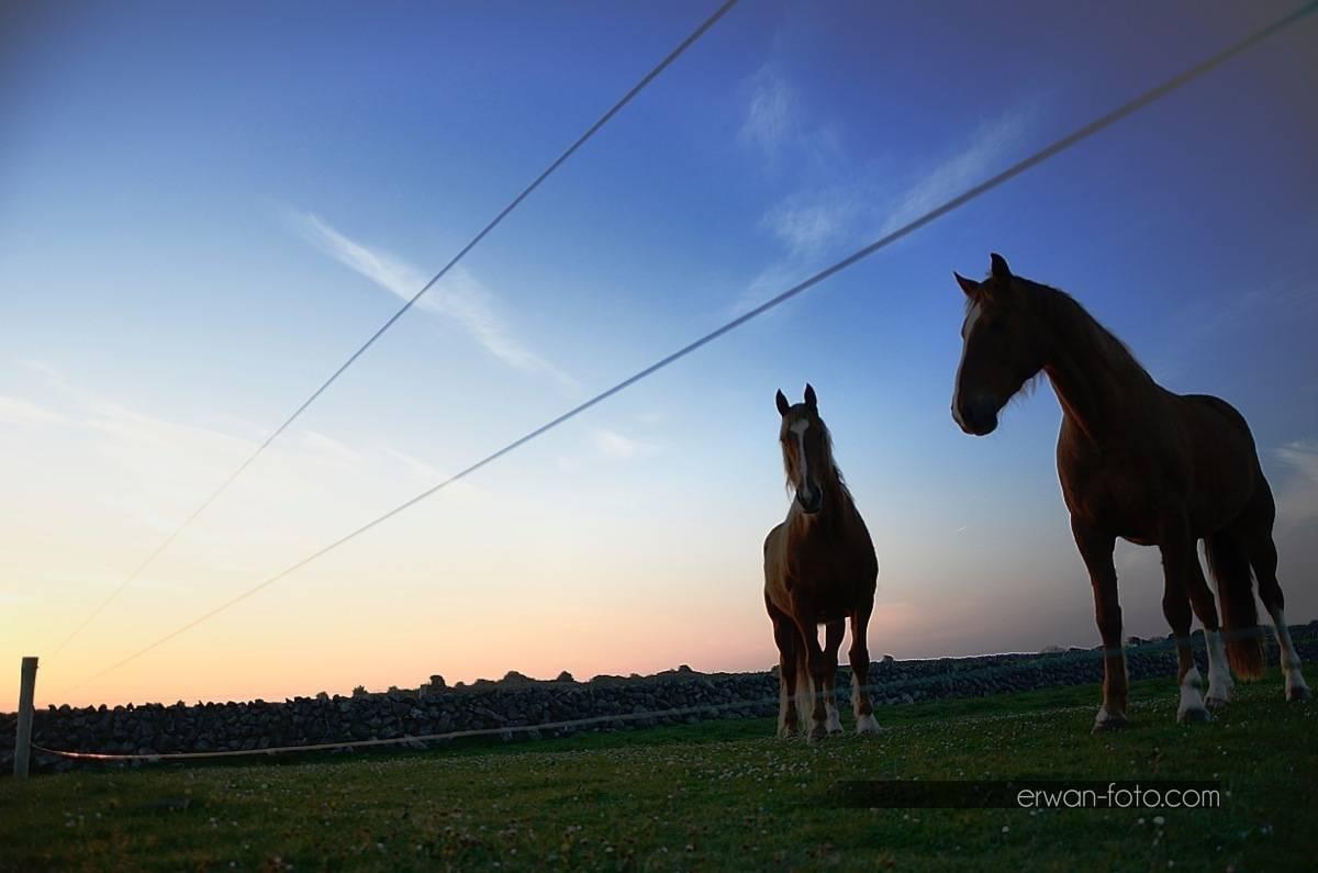 _DSC2720-irish-horse-erwan-foto