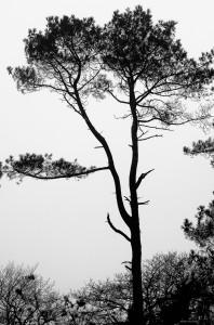 Ombre chinoise sur la route du bois du nevet