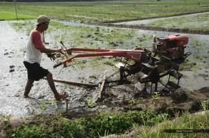 Indonesian people : Java & Bali